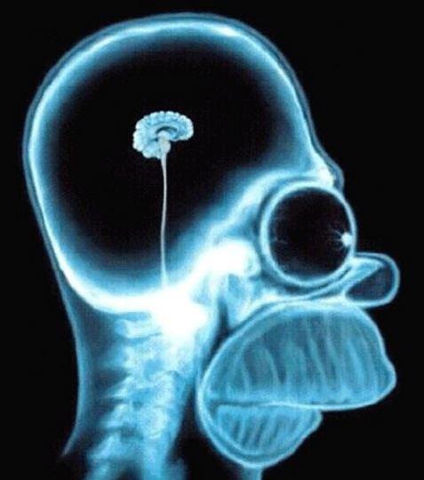 In gesprek over Hersenbeest